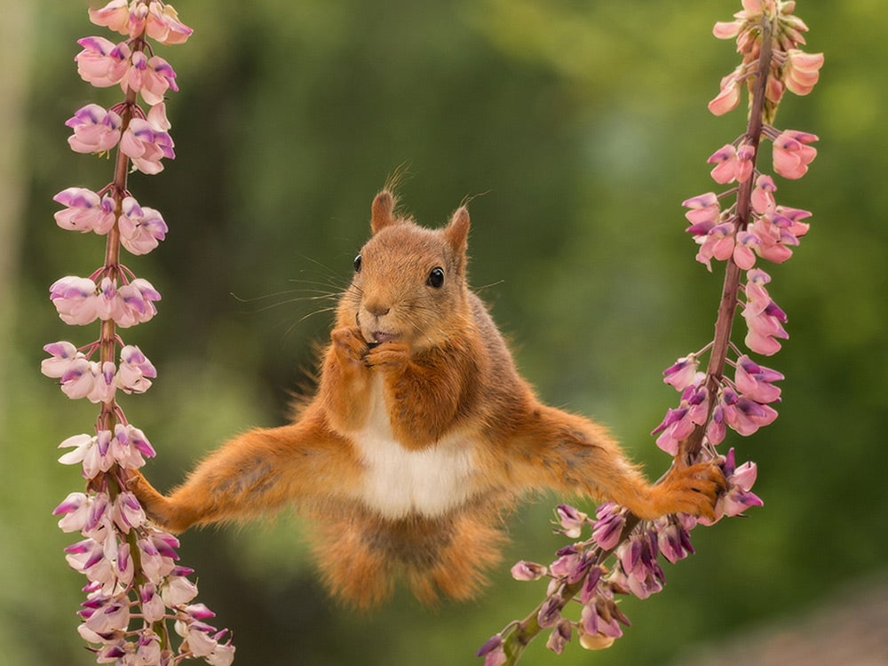 squirrel doing the splits