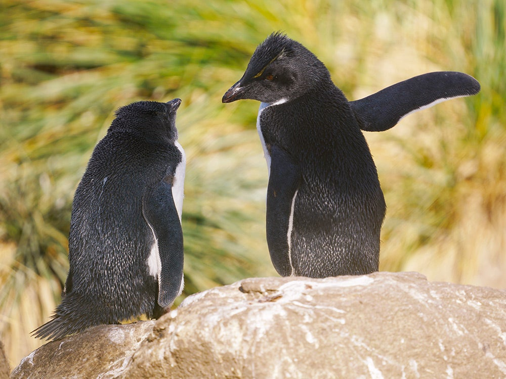 penguins pointing out the way