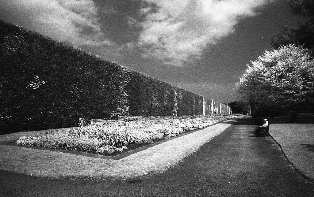 black and white hedge