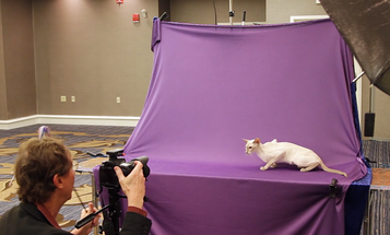 Behind the scenes with pro cat photographer, Larry Johnson
