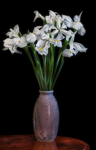 white irises in a vase.jpg