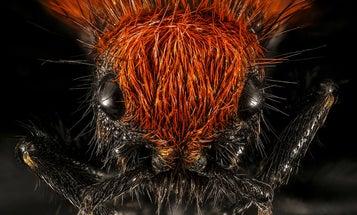 Enjoy a glorious rainbow of incredible bug photographs