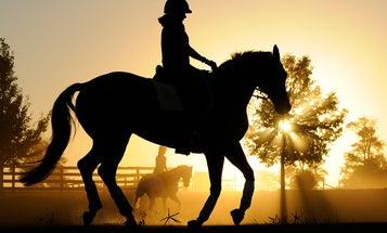 I, Photographer: Sam English Photographs Horses