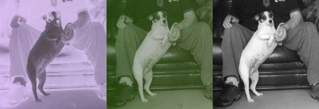 dancing dog slide scan