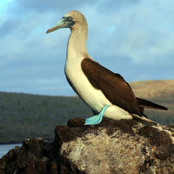 Mentor Series: Galapagos & Ecuador