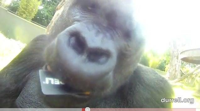 Gorillacam