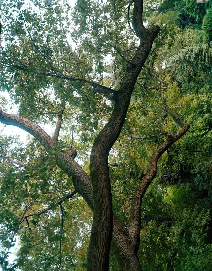 trees32.jpg