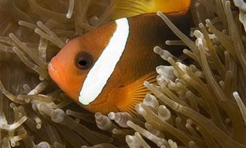 5 Tips for Better Underwater Photos