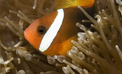 5-Tips-for-Better-Underwater-Photos