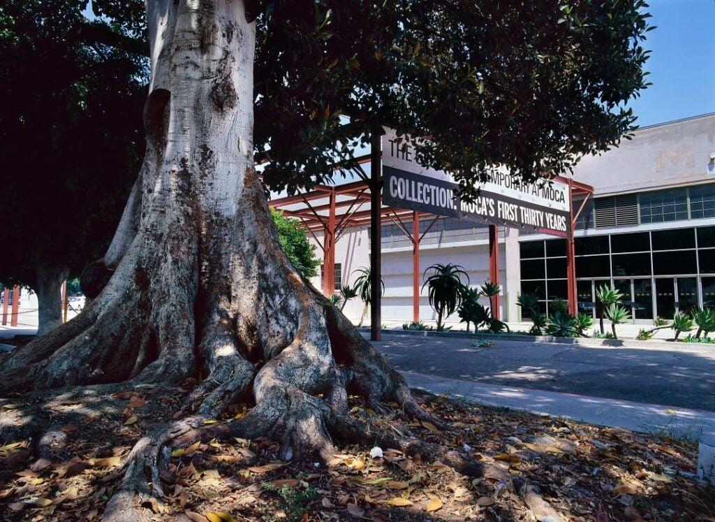 trees16.jpg