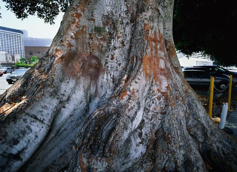 trees13.jpg