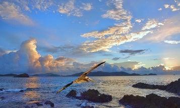 Mentor Series: US Virgin Islands