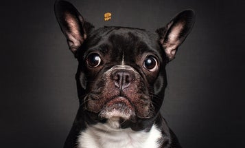Hilarious high speed flash photos of dogs catching treats