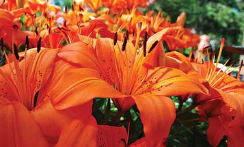 How To: Tips for Better Flower Photographs