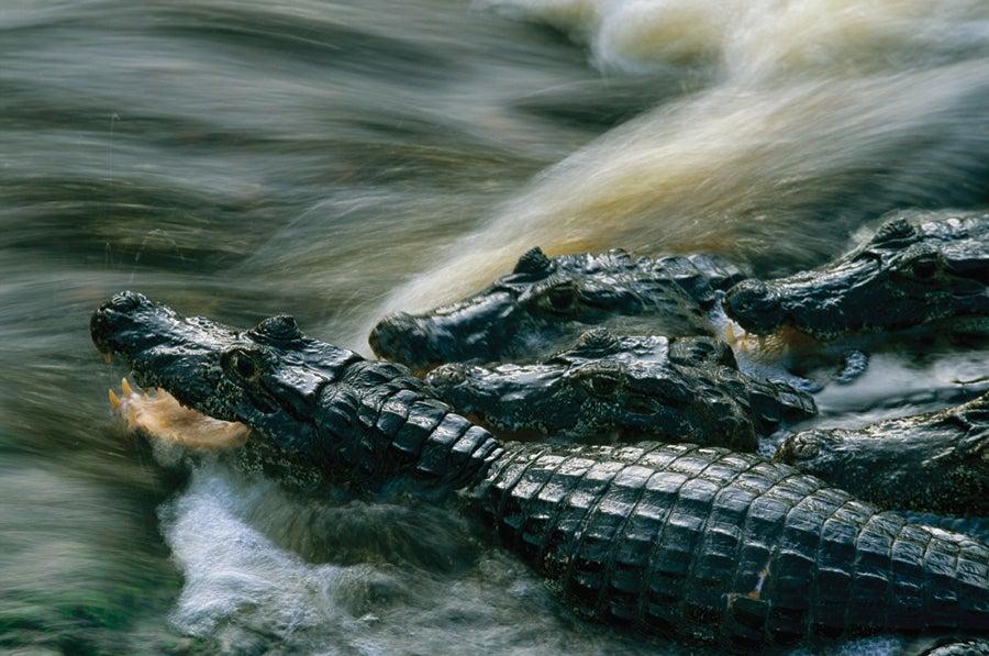 """""""Pantanal,"""