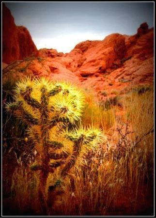 Mentor Series: Nevada: Vegas & The Desert