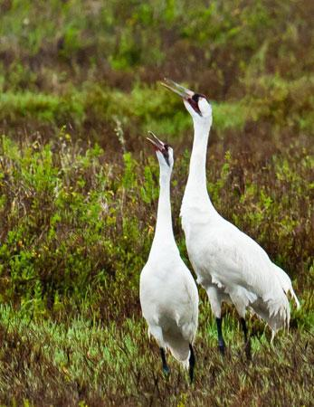 Mentor Series: South Texas Bird Migration