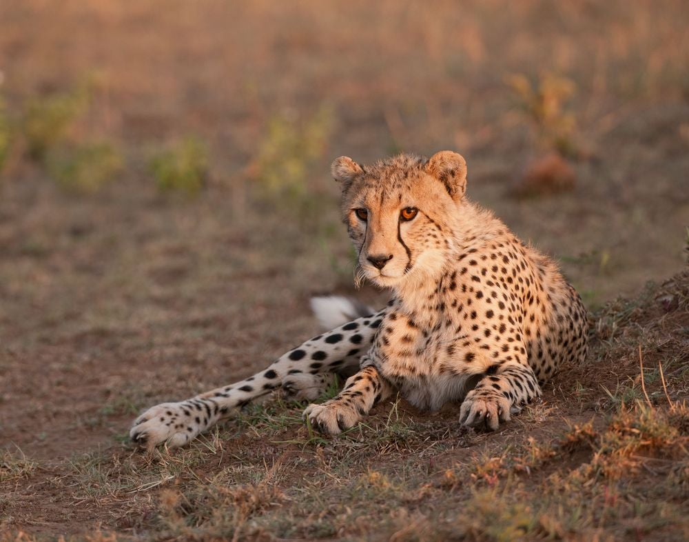 Photo Workshop: Tanzania Photo Safari