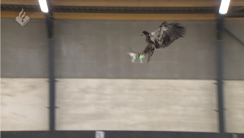 Dutch National Police Catch Unauthorized Drones With Trained Eagles