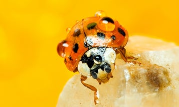 Reader Gallery: 30 Fascinating Insect Macro Photos