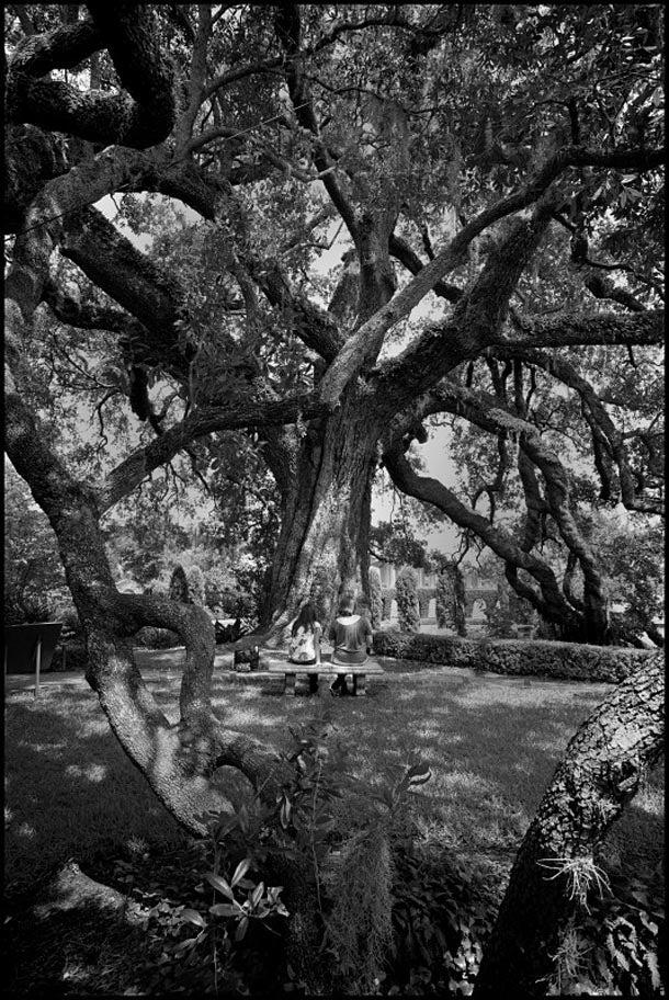 treesnighswander02.jpg