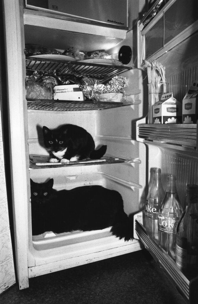 Two cats sitting in a domestic refrigerator