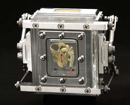 """""""Heart-Camera-The-Heart-pinhole-camera-is-made-of"""""""