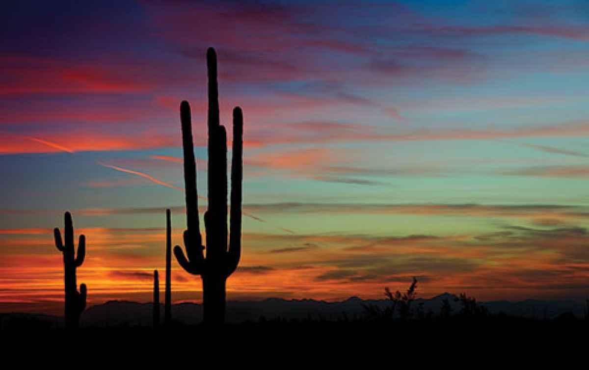 Photo Workshop: Tucson