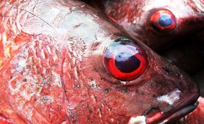Fish-Eye-View