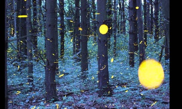 Vincent Brady Combines Long Exposures With Time-Lapse For Surreal Firefly Videos