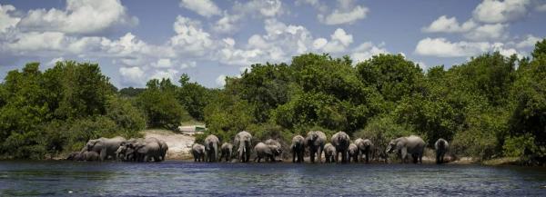 Mentor Series: Botswana Photo Safari