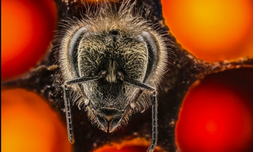 Video: See the First 21 Days of a Bee's Life