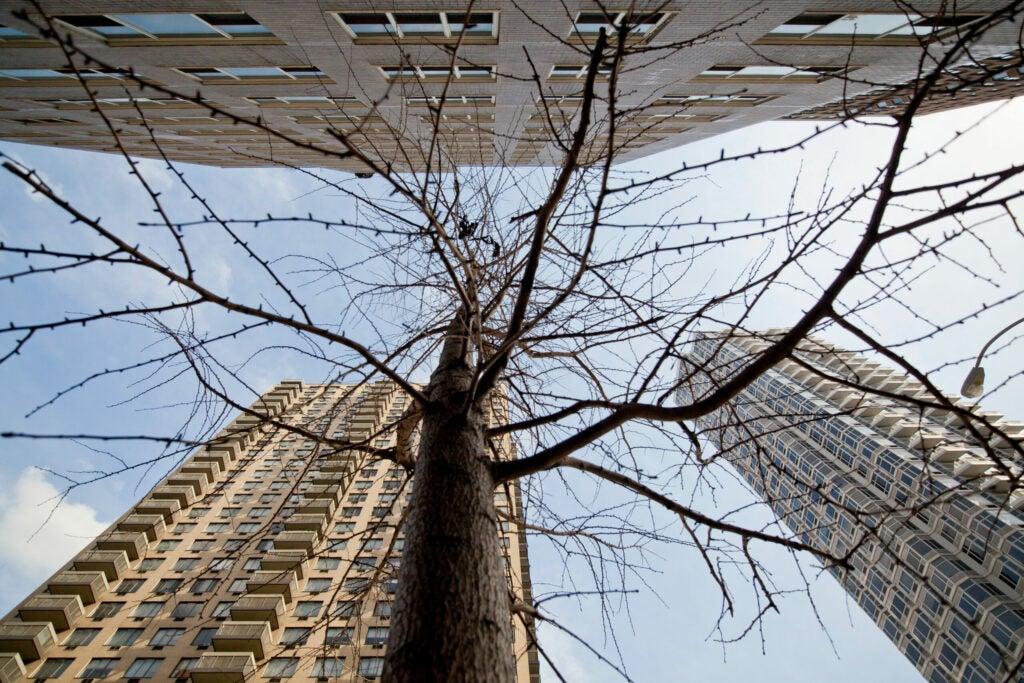 treegrowsinmanhattan1.jpg