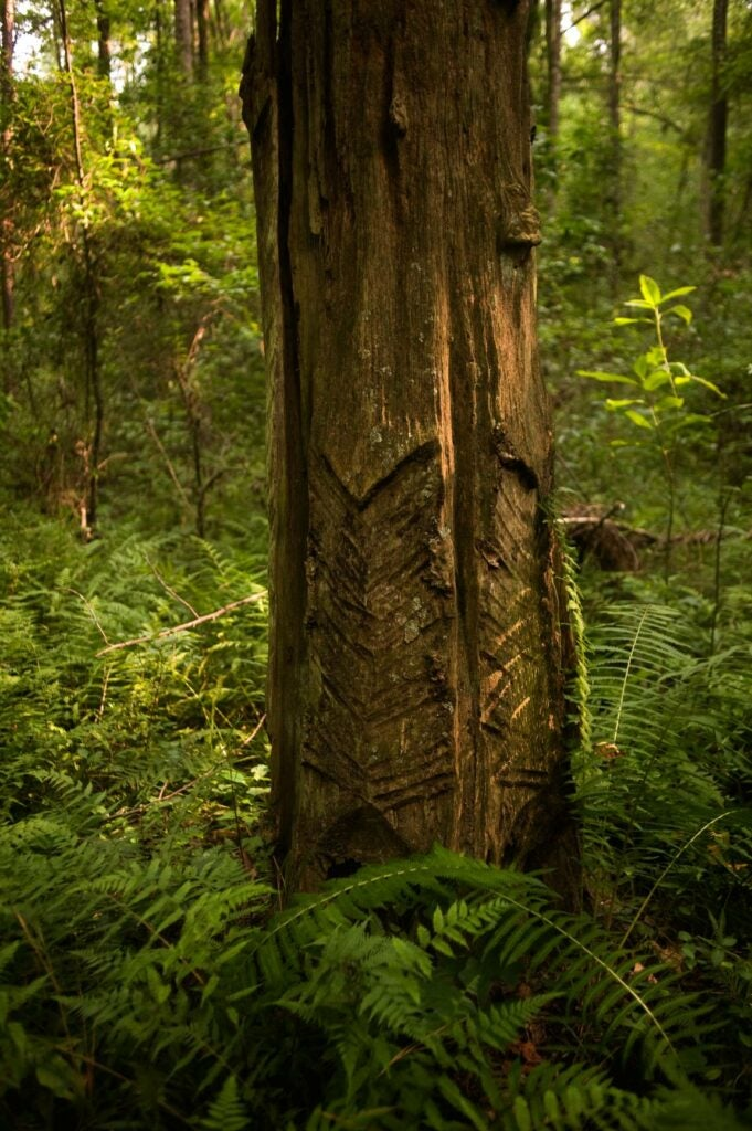 trees20.jpg
