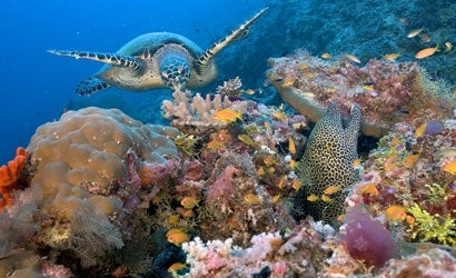 Tips-for-Underwater-Photography