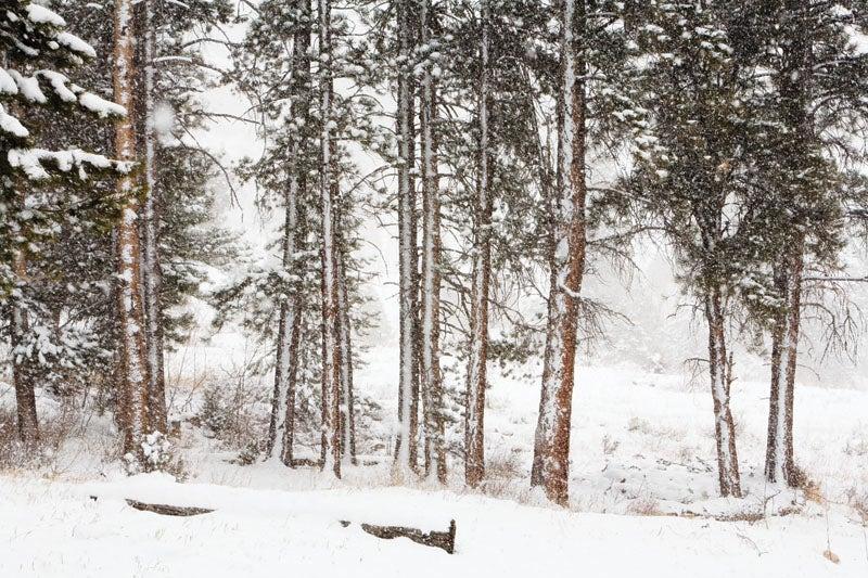blizzard03.jpg