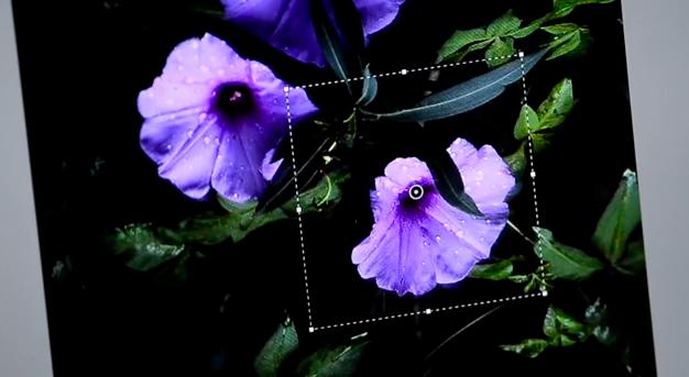 Adobe Photoshop Camera Shake Filter