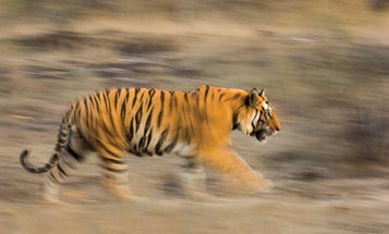 Panning Tips for Better Action Shots