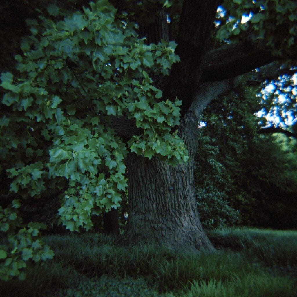 trees34.jpg