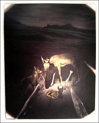 """Deer-Camera-This-tone-gelatin-silver-print-featur"""