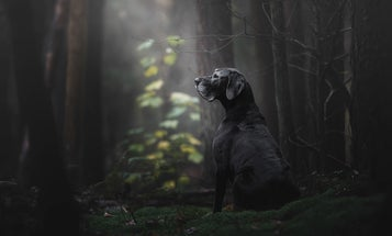 Man's best friend as documented by the world's top dog photographers
