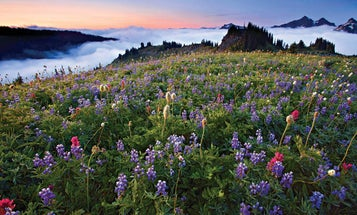 Shooting Guide: Late Summer in Mt. Rainier National Park