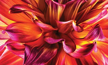 You Can Do It: Tips for Better Up-Close Flower Photography