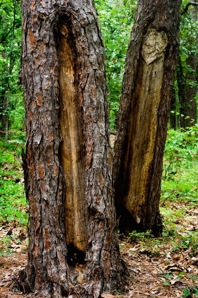 trees21.jpg