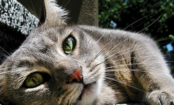 Quick Tip: How To Take Great Cat Photos