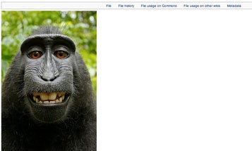 Monkey Self-Portrait Continues To Raise Issues Of Copyright Control