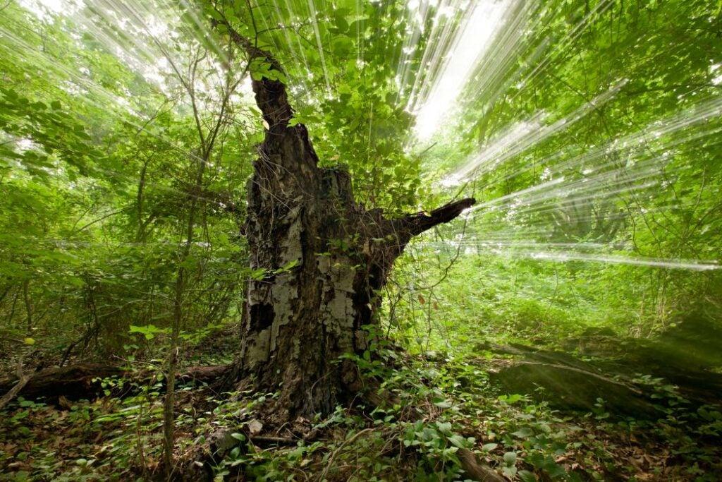 trees24.jpg