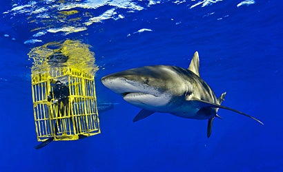 Behind-the-Lens-with-Brian-Skerry