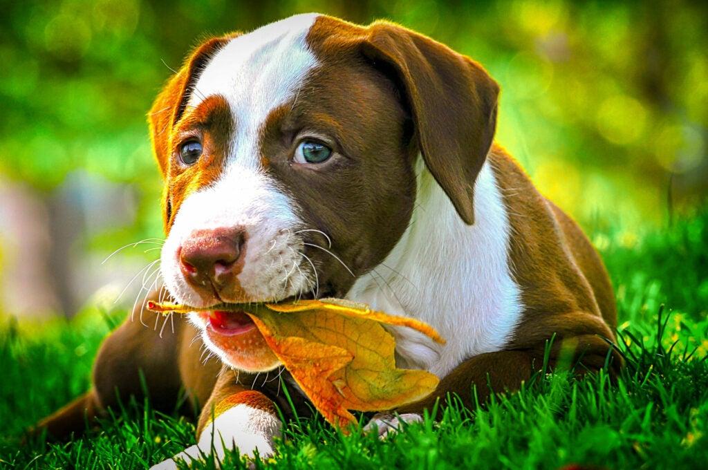 """""""Puppy"""""""
