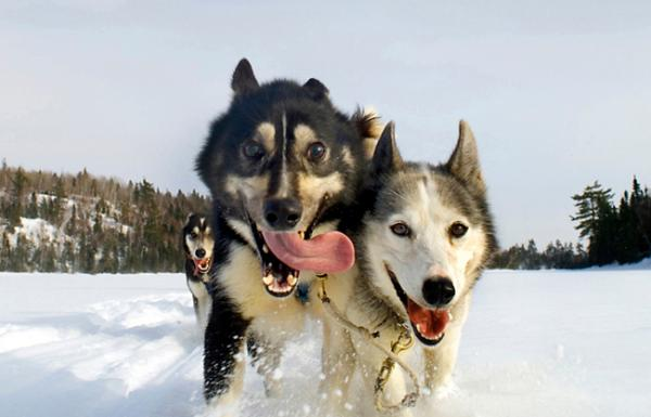 Mentor Series: Dog Sledding Weekend Minnesota Video